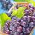 grape stock photo © tycoon