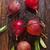 monte · maduro · peras · pereira · árvores - foto stock © tycoon