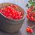 bevroren · voedsel · vruchten · ijs · witte - stockfoto © tycoon