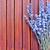 lavande · floraison · jardin · botanique · pourpre · jardin · d'herbes · aromatiques - photo stock © tycoon