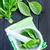 ramoscello · fresche · basilico · isolato · bianco · alimentare - foto d'archivio © tycoon