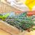 impianti · primo · piano · fresche · verde · piccolo · foglie - foto d'archivio © tycoon
