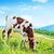 自然 · 牛 · フィールド · 春 · 風景 · 草 - ストックフォト © tycoon