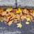 осень · лист · тротуаре · темно · текстуры · город - Сток-фото © ultrapro