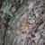 dąb · kory · powierzchnia · mech · naturalnych · tekstury - zdjęcia stock © ultrapro