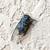 verano · insectos · maravilloso · sonido · caliente - foto stock © ultrapro