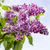 arbusto · belo · flor · folha · jardim - foto stock © ultrapro