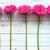 rose · marguerites · vent · printemps · jardin - photo stock © unikpix