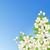 sakura on the background of blue sky stock photo © user_10003441
