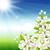 cereja · flores · sakura · casamento · natureza - foto stock © user_10003441