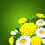 wiosenny · kwiat · bukiet · odizolowany · biały · słońce · zielone - zdjęcia stock © user_10003441