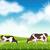 vacas · verão · prado · vaca · céu · grama - foto stock © user_10003441