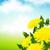 yellow dandelions stock photo © user_10003441