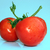 Bunch of fresh tomatoes on blue background stock photo © user_11056481