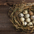 Quail eggs stock photo © user_11056481