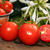 Fresh ripe tomatoes and half of cutted tomato stock photo © user_11056481