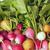 friss · retek · sokszínű · természet · nyár · szín - stock fotó © user_11056481