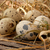 Quail eggs stock photo © user_11056481