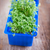 fresh edible healthy water cress in the box stock photo © user_11224430
