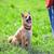 jardim · cachorro · parque · mão · topo · cabeça - foto stock © user_11224430