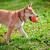 jonge · groene · tuin · hond · dier · huisdieren - stockfoto © user_11224430