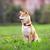 fiatal · pihen · zöld · kert · kutya · állat - stock fotó © user_11224430