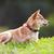 jardín · cachorro · parque · mano · superior · cabeza - foto stock © user_11224430