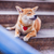jovem · verde · jardim · cão · animal - foto stock © user_11224430