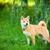 tuin · puppy · park · hand · top · hoofd - stockfoto © user_11224430