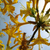 yellow flower in the backlight stock photo © ustofre9