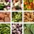 ジャガイモ · ブロッコリー · トマト · グレービー · 食品 · ディナー - ストックフォト © ustofre9
