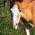 foal portrait stock photo © vadimmmus