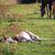 ló · csikó · nyár · testtartás · természet · mező - stock fotó © vadimmmus