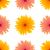 spring pink yellow flowers isolated stock photo © valeo5