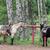 dois · cavalos · fazenda · belo - foto stock © vanessavr