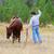 cowboy · paardrijden · paard · illustratie · cactus - stockfoto © vanessavr