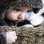 おもちゃ · 座って · 小 · バスケット · 白 · 犬 - ストックフォト © vanessavr