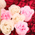 soap flowers stock photo © vanessavr