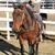 vaqueiro · jovem · cavalo · escalada · homem · esportes - foto stock © vanessavr