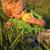 cute · bebé · nino · comer · manzana · cubierto - foto stock © vanessavr