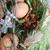 páscoa · atravessar · ovos · pintado · dourado · decorado - foto stock © vanessavr