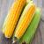 corn cobs stock photo © vankad