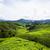 茶 · 高地 · 緑 · 丘 · 風景 · 空 - ストックフォト © Vanzyst