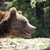 Wild big male brown bear stock photo © Vanzyst