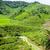 çay · gökyüzü · yaprak · yeşil · dağlar · Asya - stok fotoğraf © vanzyst