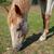 ポニー · 外 · フェンス · 草 · 自然 · 馬 - ストックフォト © vapi