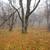 erdő · kert · arany · levelek · ősz · ősz - stock fotó © vapi
