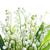 liliomok · völgy · izolált · fehér · virág · virágok - stock fotó © vapi