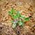 little green plant stock photo © vapi