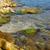 coast with stones with green marine algae stock photo © vapi